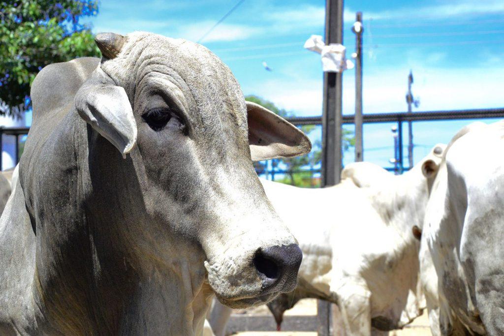 Ainda é cedo para estimar impacto da Carne Fraca na agropecuária goiana, diz gerente da Faeg
