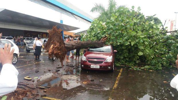 Chuva e ventos fortes derrubam árvore e estruturas do estacionamento da Rodoviária de Goiânia