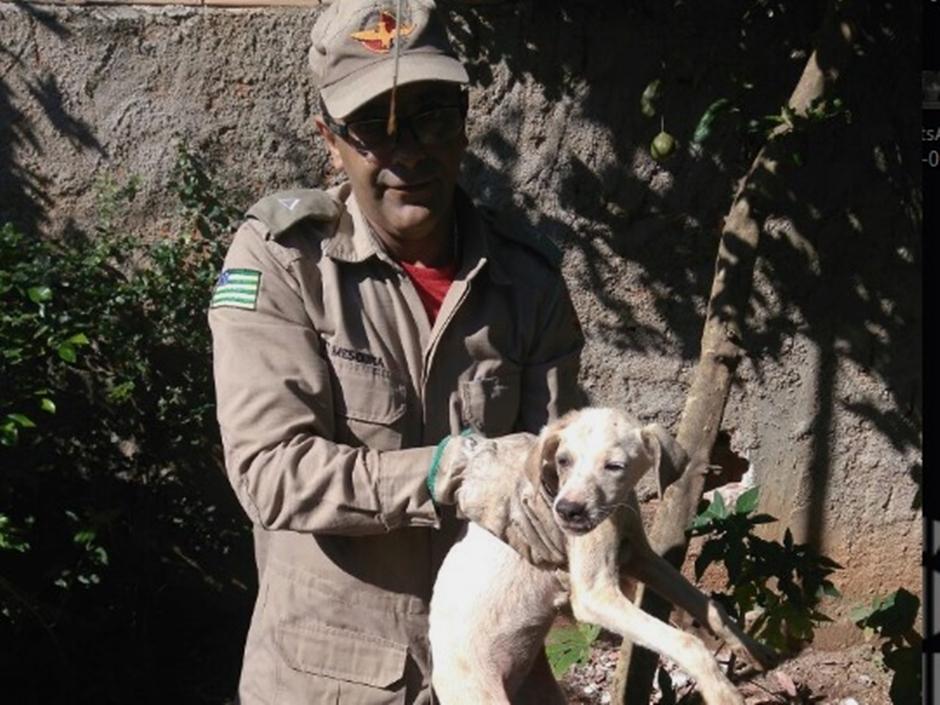 Bombeiros de Caldas Novas resgatam cachorro que ficou preso entre muro e parede de casa