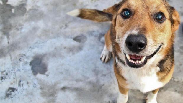 Shopping de Aparecida de Goiânia promove feira de adoção de animais