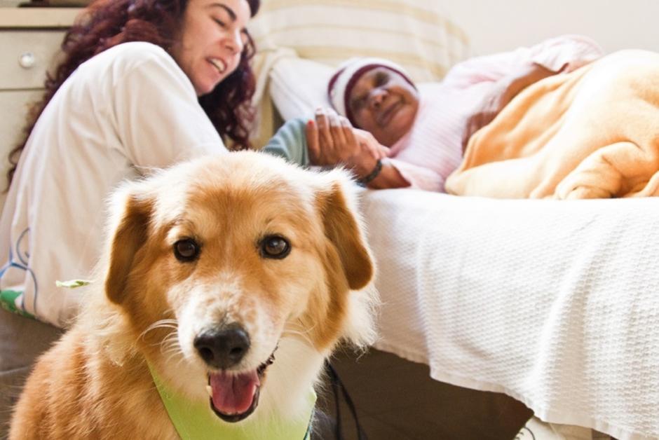 Projeto de Lei propõe visita de animais domésticos a pacientes em hospitais de Goiás