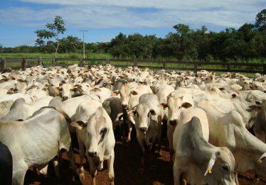 Para a Sociedade Rural Brasileira, Carne Fraca pode ter efeitos positivos no agronegócio