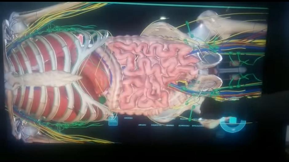 Anatomia em 3D: empresa cria máquina para substituir cadáveres nas ...