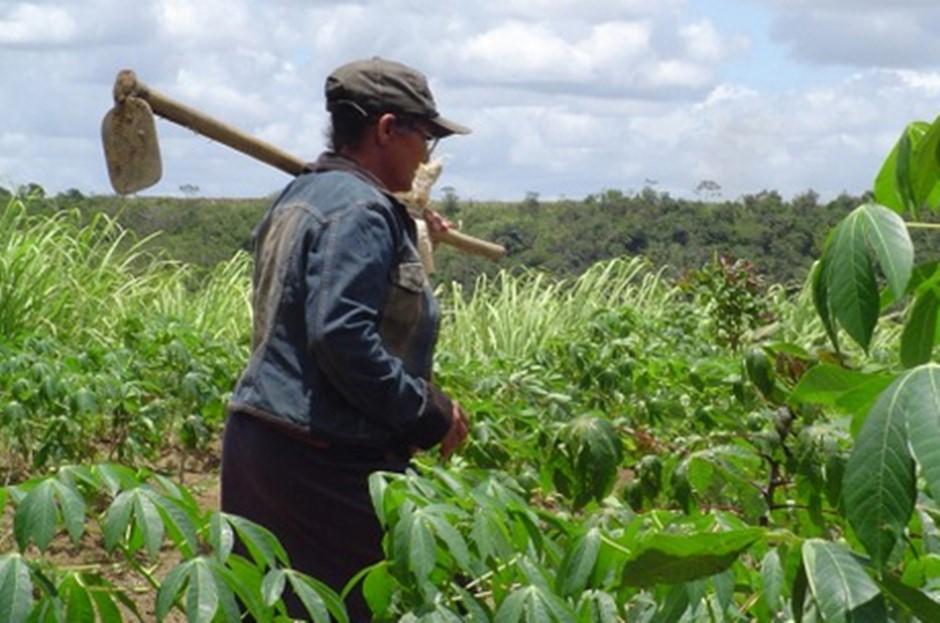 Trabalhadora rural será indenizada por empresa em R$ 10 mil após ser intoxicada por agrotóxico