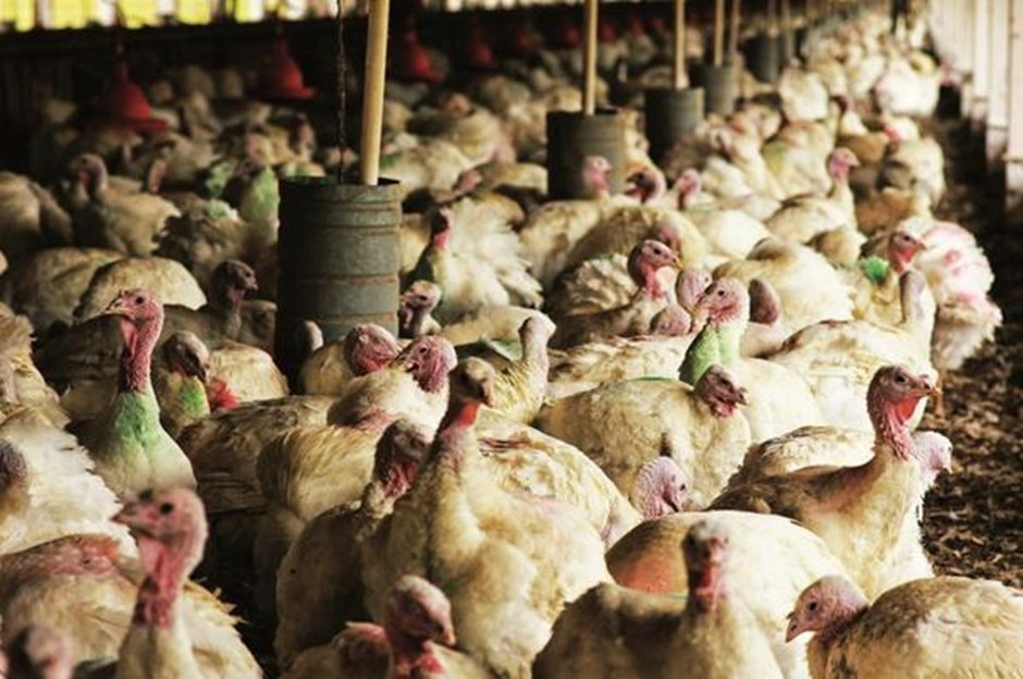 BRF retoma nesta terça abates de aves na unidade de Mineiros, em Goiás