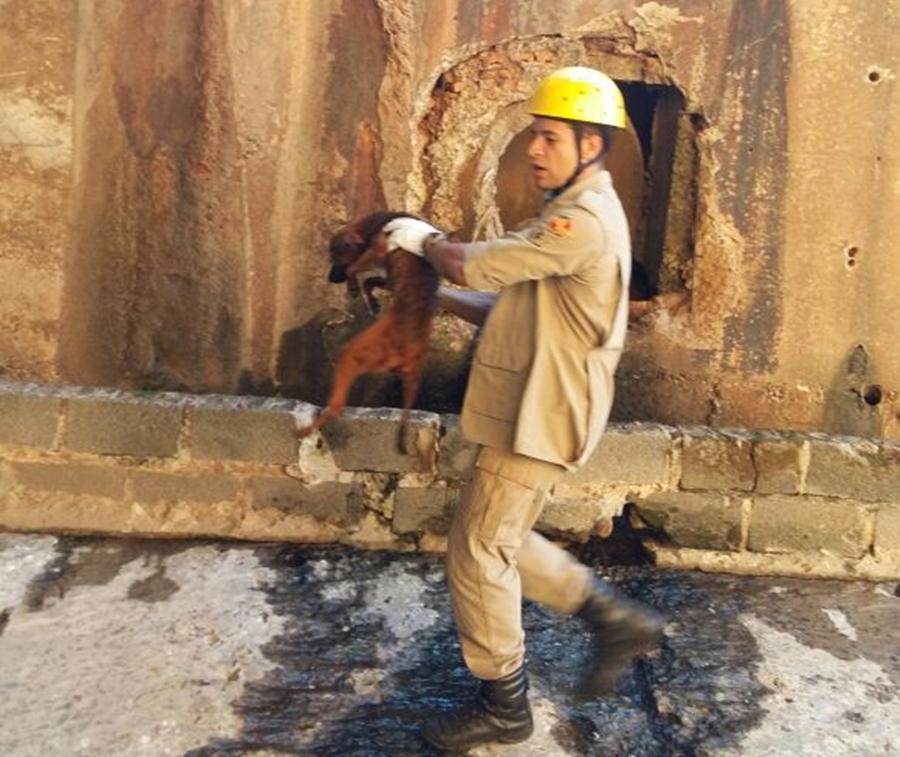 Bombeiros resgatam cachorro que caiu no córrego da Marginal Botafogo, em Goiânia