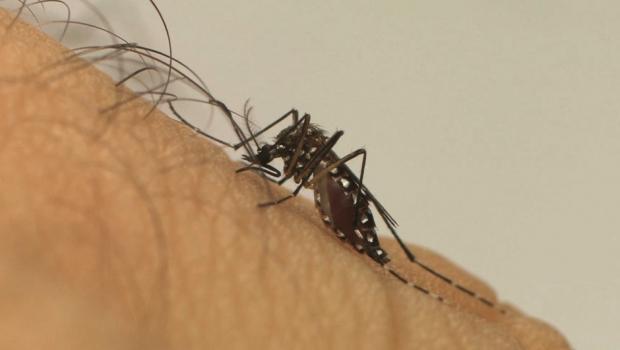 Duas pessoas da mesma família morrem com suspeita de dengue hemorrágica