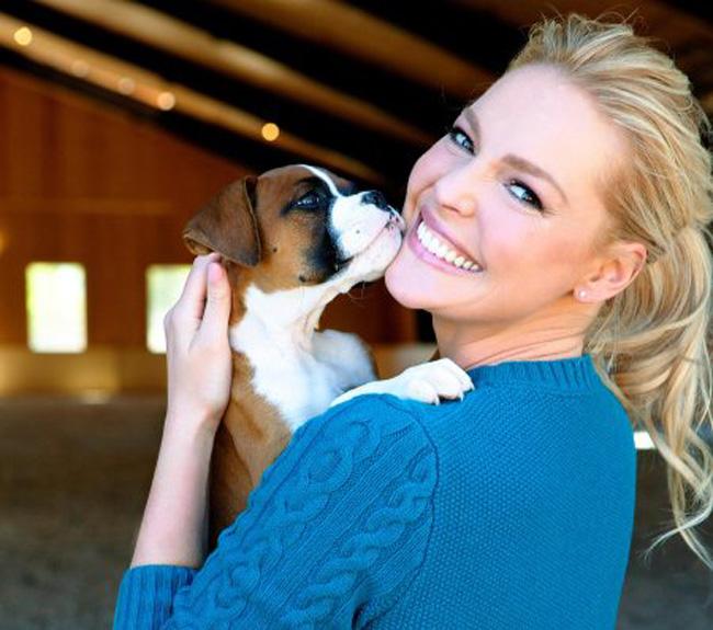 Katherine Heigl tem fundação de apoio e resgate de cães e gatos