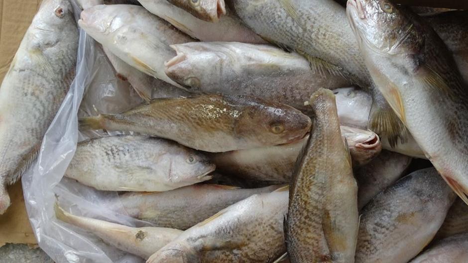 Preço de pescado pode ter variação de até 290%