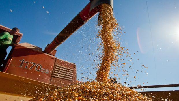 Produção de grãos no Brasil deve crescer 1,6% este ano, diz IBGE