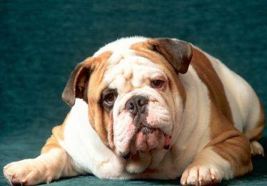 Justiça goiana atende pedido de tutor e determina que cachorro com Leishmaniose não seja sacrificado