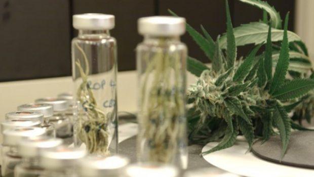 Deputado apresenta projeto para garantir fornecimento de medicamentos derivados da maconha