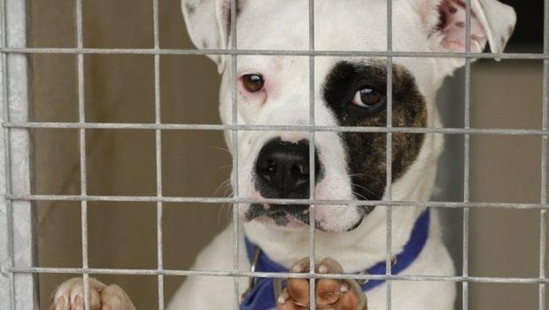 Vereador quer proibir sacrifício de cães e gatos em Goiânia