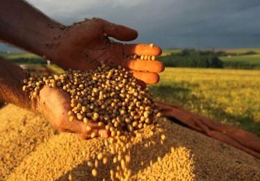 Safra de grãos deve crescer 7,5% em Goiás