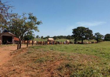 Romeiros de Turvânia doam 900 quilos de arroz para Vila São Cottolengo e outras instituições