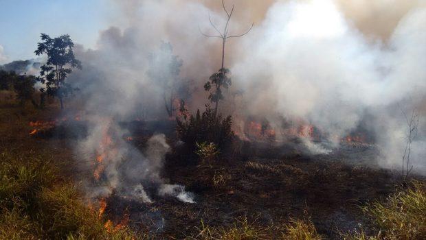 Cinco pessoas são presas por queima ilegal em fazenda na BR-364, em Jataí