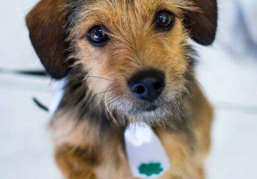 ONG Santuário leva animais para adoção ao Passeio das Águas Shopping