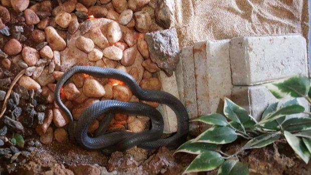 No tempo frio, serpentário do Zoológico recebe aquecimento especial