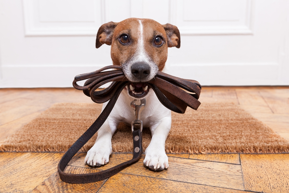 Aprovado em 1ª votação projeto que regulamenta posse responsável de animais domésticos