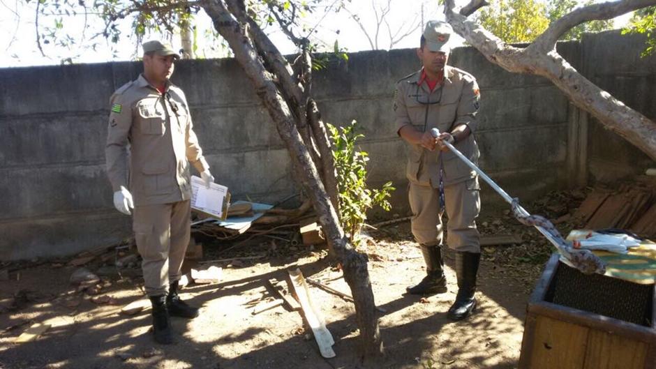 Bombeiros resgatam jiboia em quintal de residência em Luiz Alves