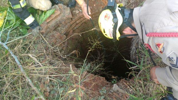 Corpo de Bombeiros resgata cães que caíram em cisterna, em Itumbiara