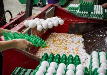 Dezessete países europeus são afetados por escândalo dos ovos contaminados