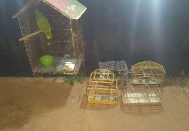 Rotam descobre comércio de entorpecentes e recupera animais silvestres em um bar em Luziânia
