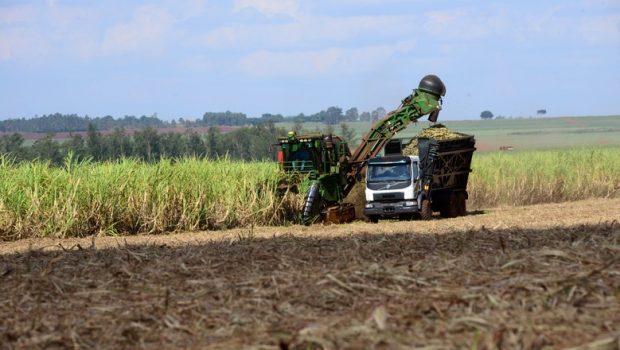 Goiás deverá colher 70 milhões de toneladas de cana-de-açúcar