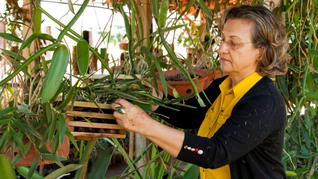 Goiana descreve espécies nativas para livro do Ministério do Meio Ambiente