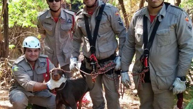 Bombeiros resgatam cadela presa em manilha no Córrego Cascavel