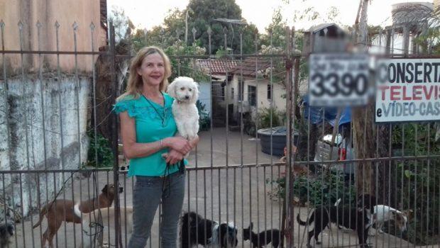 Em Goiânia, animais abandonados ganham um lar graças à ação de grupos e protetores independentes