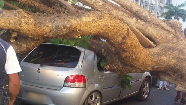 Árvore cai em cima de dois carros na Avenida Anhanguera, no Centro