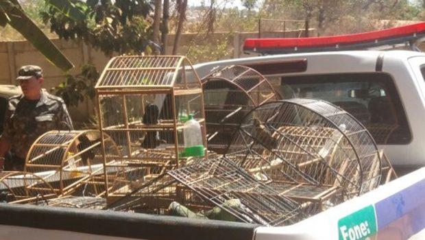 Batalhão Ambiental resgata galos de rinha em Trindade