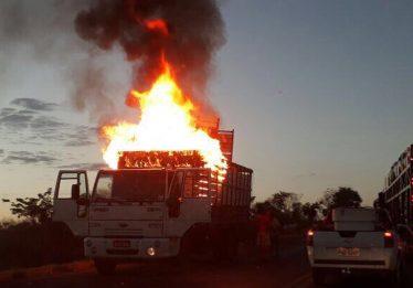 Animais morrem após caminhão boiadeiro pega fogo na BR-153, em Uruaçu