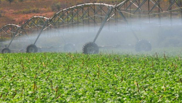 """""""O abastecimento público tem que ser prioridade"""", afirma delegado sobre uso de água para irrigação de propriedades particulares"""