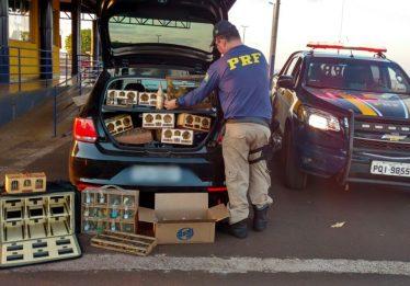 PRF prende casal por tráfico de animais silvestres, em Itumbiara