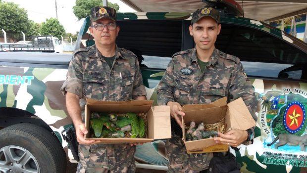 Homem é preso por comercializar filhotes de papagaio, em Firminópolis