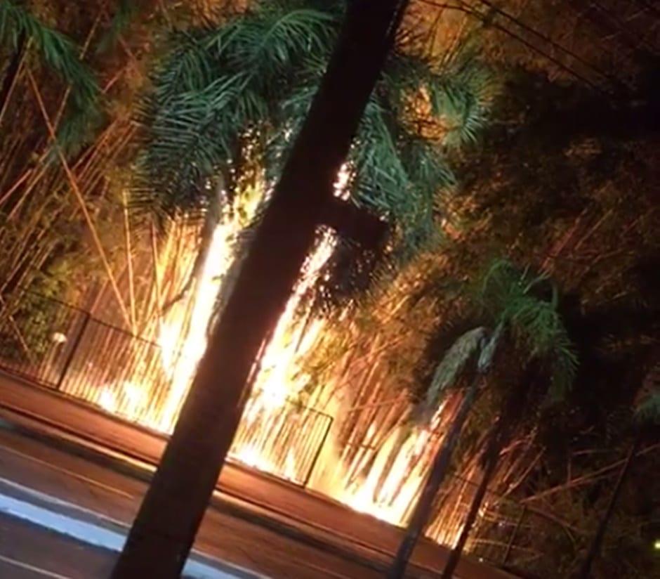 Bombeiros combatem incêndio em bambuzal do Parque Areião, em Goiânia