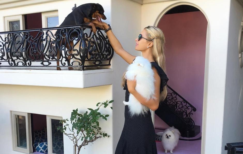 Cães de Paris Hilton vivem em mansão exclusiva