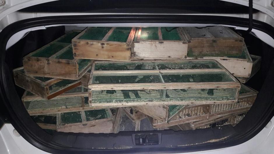 PM apreende 450 filhotes de pássaros sendo transportados de forma irregular