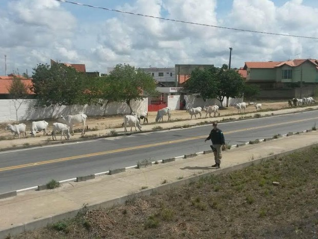 PRF e Município de Rio Verde firmam cooperação para retirada de animais de acostamentos