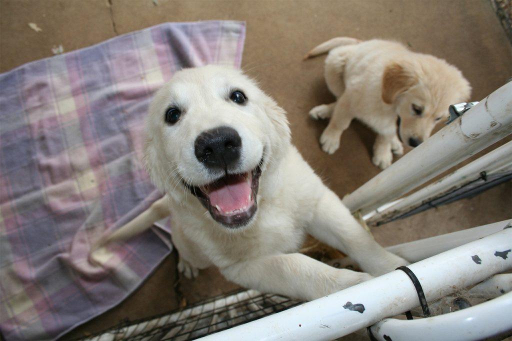 Sancionado projeto de lei que multa quem promove maus-tratos em animais, em Aparecida