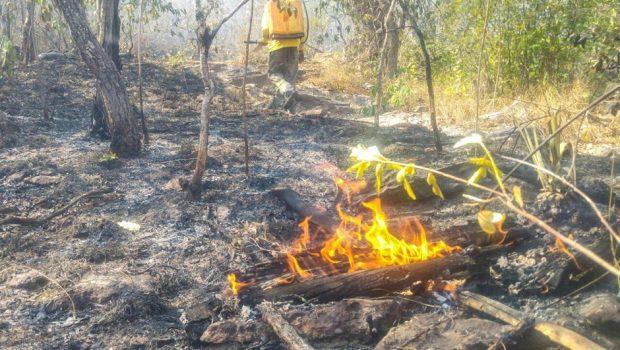Incêndio no Parque da Chapada dos Veadeiros está controlado, mas surge novo foco