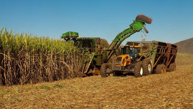 Cana-de-açúcar em Goiás tem cenário positivo na safra 2017/18