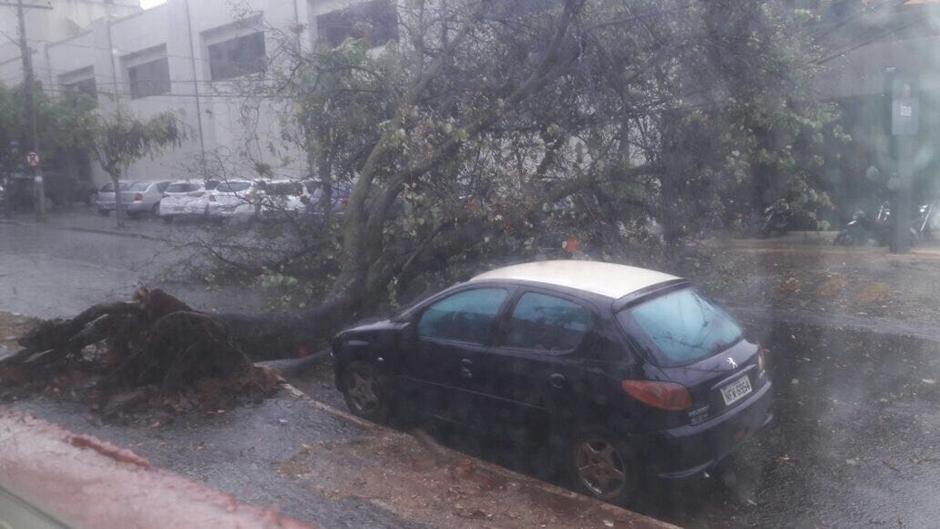 Chuva e ventania derrubam árvores em Goiânia