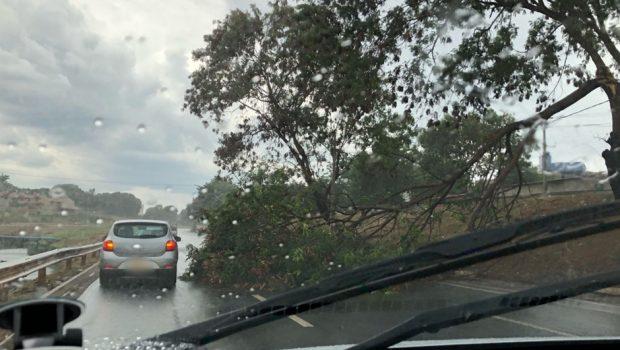 Chuva causa queda de árvores e complicações no trânsito da capital