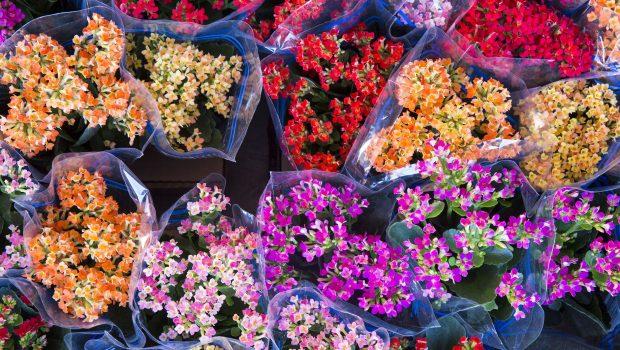 Finados: Preço das flores sobe 11,76% em relação ao ano passado