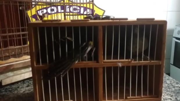 PRF prende homem transportando animais silvestres em Jataí