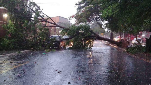 Chuva causa alagamento e derruba árvores em ruas de Goiânia; veja vídeos