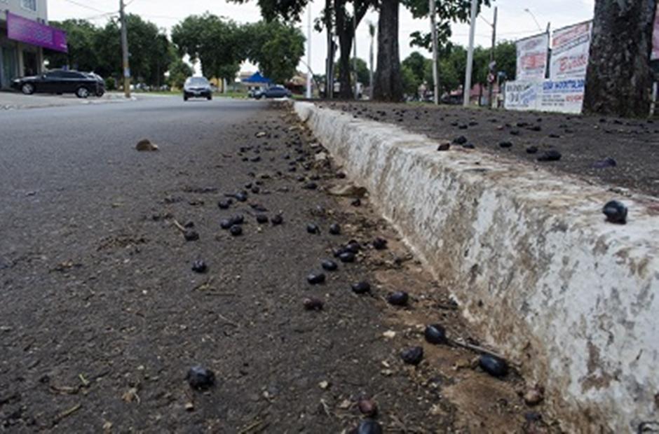 Prefeitura inicia substituição de jamelões na Avenida Ipanema